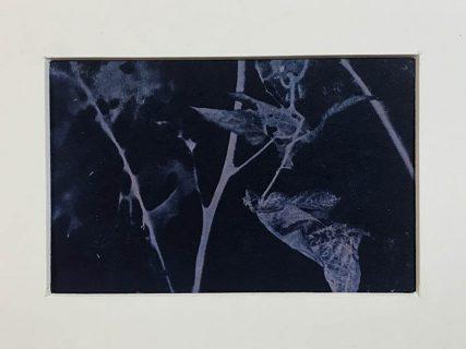 Five | 8 x 12 cm, frame 23 x 28 cm | €110,-