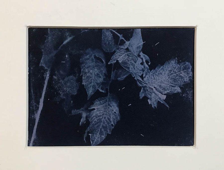 Six    |   8,5 x 12 cm, frame 23 x 28 cm   |   €110,-